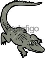 AlligatorFreehand Image