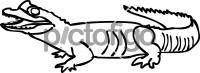 AlligatorFreehand Image