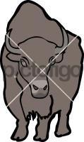 American Bison BuffaloFreehand Image
