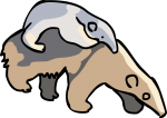 Anteater freehand drawings