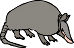 Armadillo freehand drawings