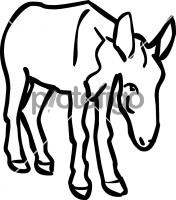 Ass donkeyFreehand Image