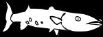 Barracuda freehand drawings