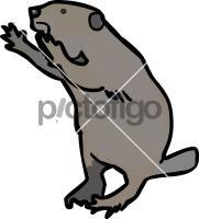 BeaverFreehand Image