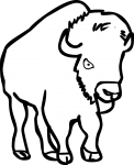 Bison freehand drawings