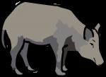 Boar freehand drawings