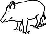 Boar freehand drawings