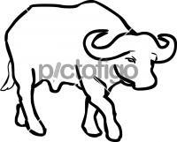 BuffaloFreehand Image