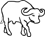 Buffalo freehand drawings