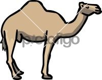CamelFreehand Image