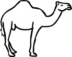 Camel freehand drawings