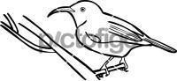 Abbotts Sunbird