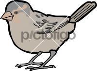 Abd Al Kuri Sparrow