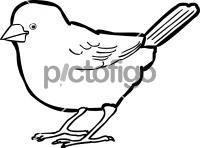 Abd Al Kuri SparrowFreehand Image
