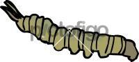 CaterpillarFreehand Image