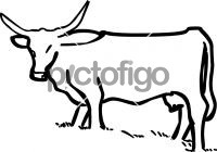 CattleFreehand Image