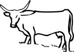 Cattle freehand drawings