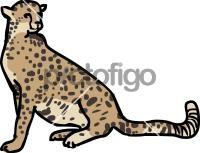 CheetahFreehand Image