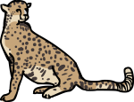 Cheetah freehand drawings