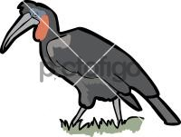Abyssinian Ground HornbillFreehand Image