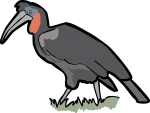 Abyssinian Ground Hornbill freehand drawings