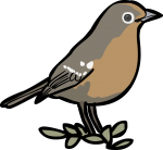 Abyssinian Ground Thrush freehand drawings