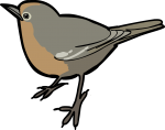 Abyssinian Ground Thrush