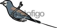 Abyssinian RollerFreehand Image