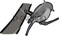 Abyssinian Slaty FlycatcherFreehand Image