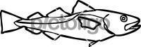 Cod FishFreehand Image