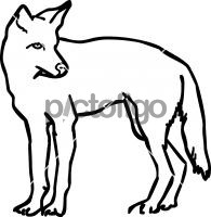 CoyoteFreehand Image