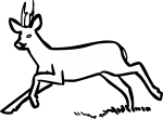 Deer freehand drawings