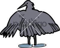 Black HeronFreehand Image