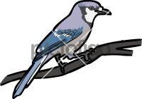 Blue JayFreehand Image