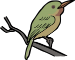 Broad billed Tody freehand drawings