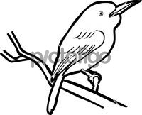 Broad billed TodyFreehand Image