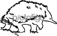 EchidnaFreehand Image