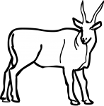 Eland freehand drawings