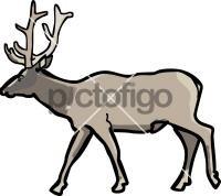 Elk WapitiFreehand Image