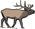 Elk Wapiti freehand drawings