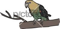 Cape ParrotFreehand Image
