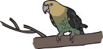 Cape Parrot freehand drawings