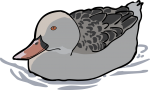Cape Teal freehand drawings