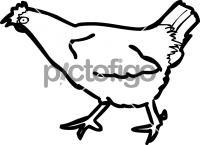 ChickenFreehand Image