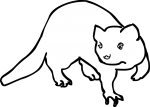 Ferret freehand drawings