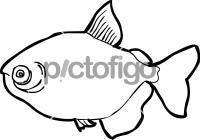 FishFreehand Image