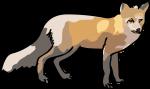 Fox freehand drawings