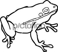 FrogFreehand Image