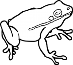 Frog freehand drawings