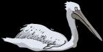 Dalmatian Pelican freehand drawings
